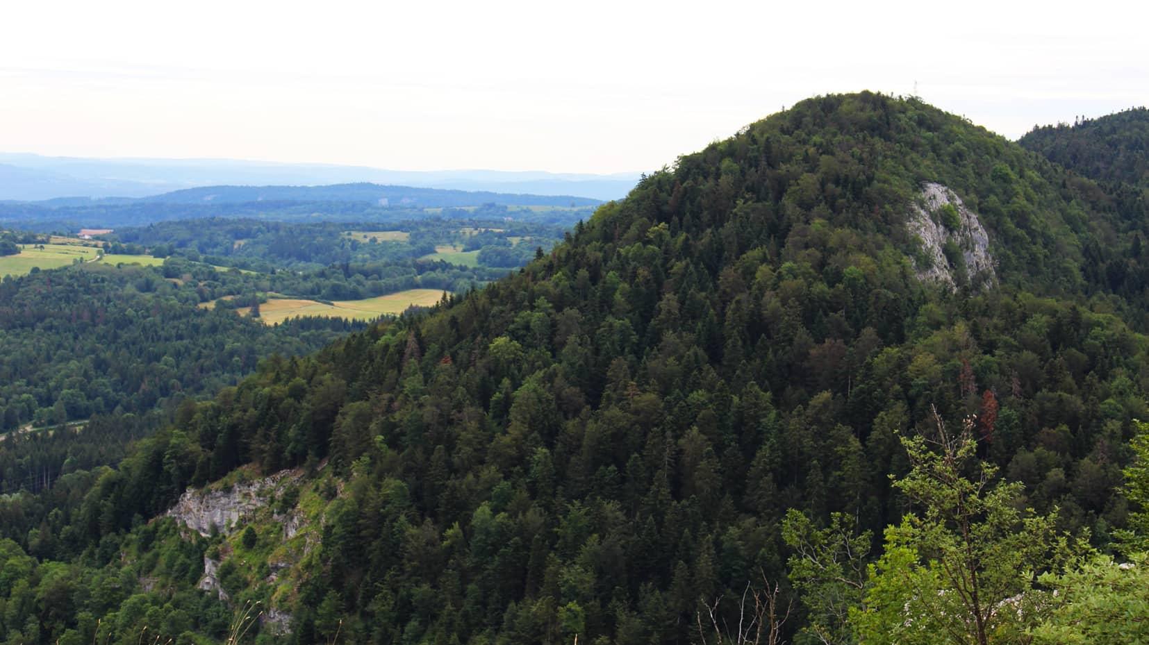 GROUPEMENT FORESTIER D INVESTISSEMENT Diversifier son patrimoine dans des forêts françaises placement pour expatrié (1)