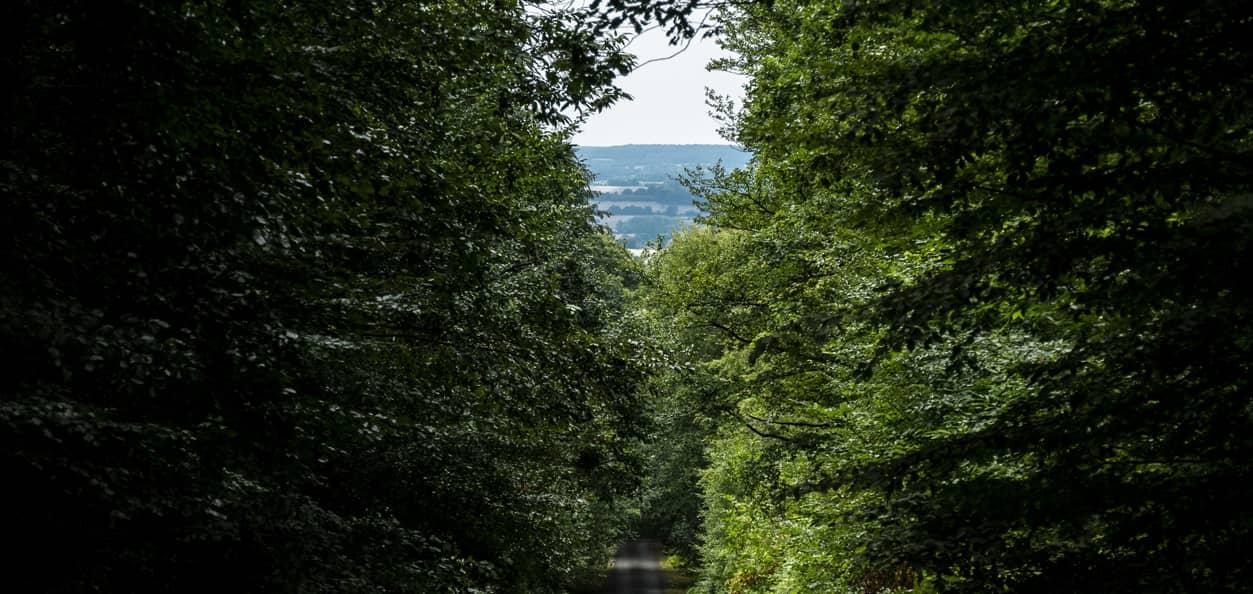 Placement pour expatriés dans un Groupement Forestier d Investissement GFI en France (1)